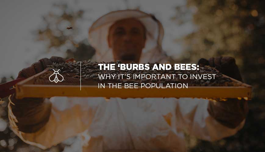 Investing in a Beehive