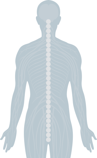 Interactive Spine | The Joint Chiropractic